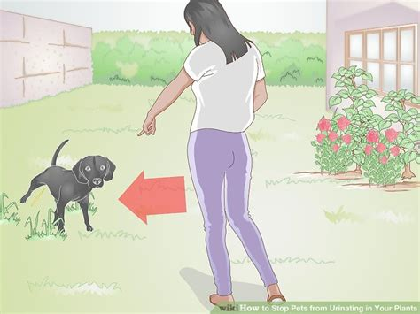 how to stop a dog from urinating in the house 3 ways to stop pets from urinating in your plants wikihow