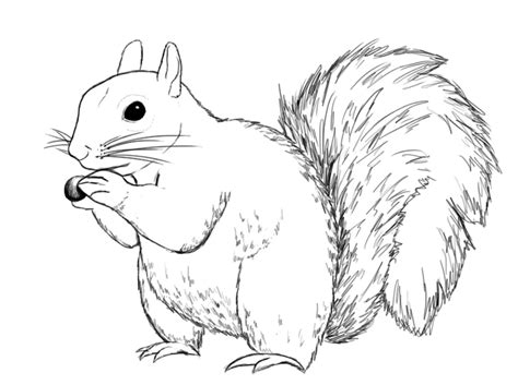 how to a squirrel how to draw a squirrel draw central