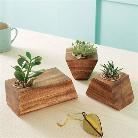 succulent holder jigsaw succulent holder by london garden trading