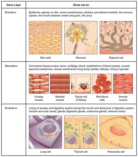 tissue sectioning methods types of tissues voer