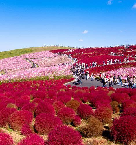 Restay Mito Mito Japan Asia mito kochia hill kanto 243 n senderismo mito