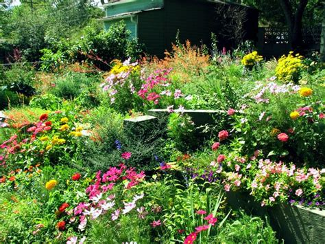 17 best images about wilflowers for the yard on pinterest gardens garden borders and backyards