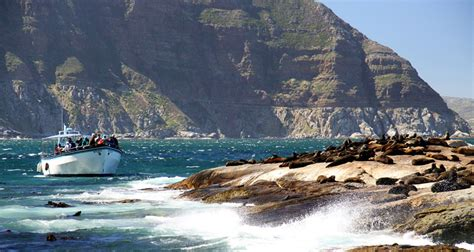 boat trip hout bay the best things to do in hout bay the inside guide