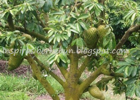 Gembor Siraman Tanaman By Hijauqu cara menanam pohon sirsak agar cepat berbuah inspirasi