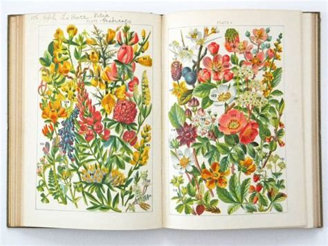 flower books vintage flower book quot our country s flowers quot 163 35flower