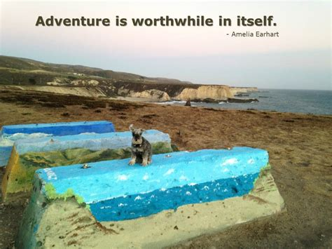 in my own backyard travel in your own backyard the pooch coach