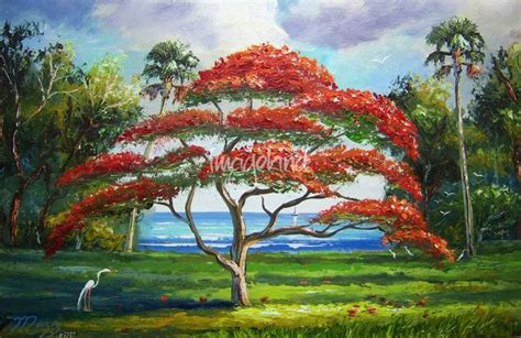 poinsiana tree decorations stunning quot flamboyant tree quot artwork for sale on prints