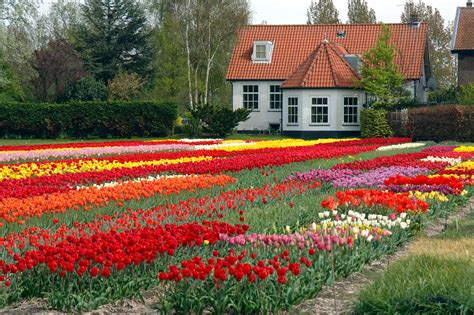 Home Garden Flowers Beautiful Flower Gardens Home Garden Ideas Flowers House Gallery With 2017 Savwi