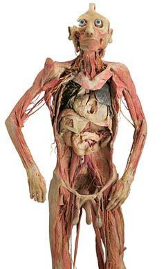 anatomia interna corpo umano anatomia o melhor da anatomia laborat 211 de anatomia