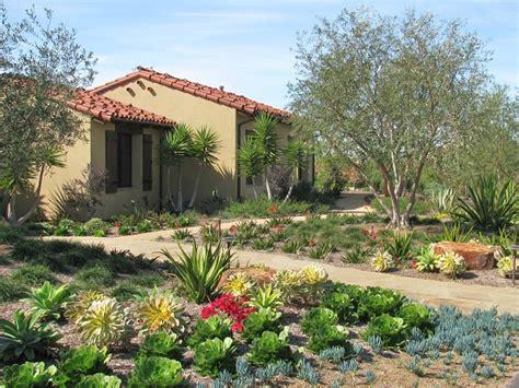 santa luz succulents monica mroz