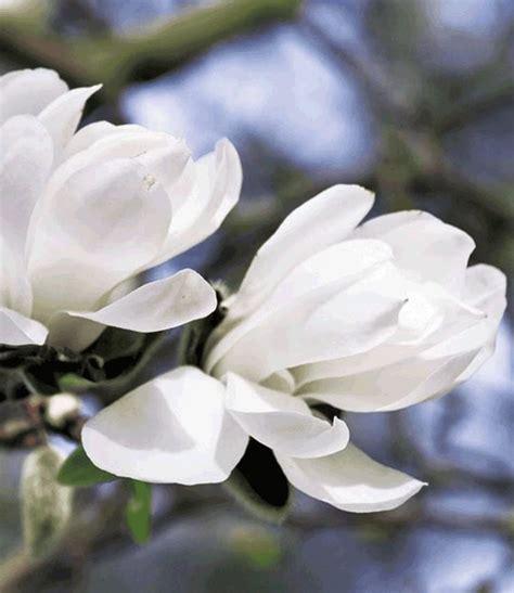 Garten Blumen Kaufen 867 by Die Besten 17 Ideen Zu Bl 252 Hende Str 228 Ucher Auf