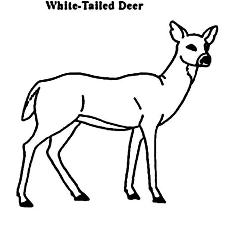realistic deer coloring pages to print coloringstar