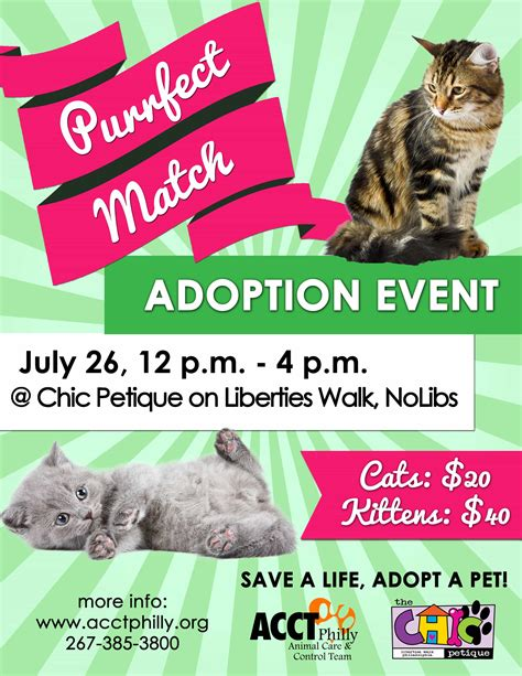 adoption events purrfect match cat adoption event acct philly