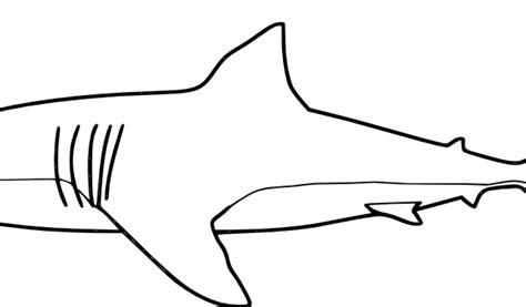 great white shark coloring pages windows coloring great