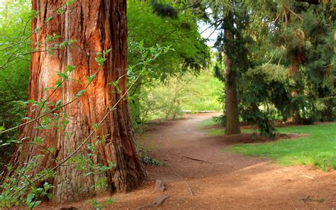 Forest Mba by Bosque Forest 171 Image Gallery