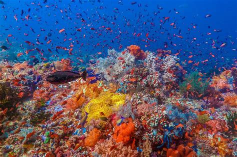 dive raja at diving raja at indonesia la galigo liveaboard