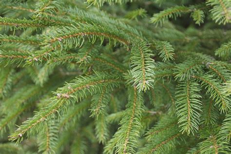 5 tips for cutting your own christmas tree at wilcox tree