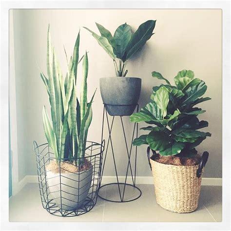 loving  indoor garden atcreativespacesby