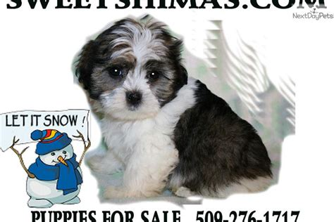 free puppies in spokane adorable shima puppy looking for a loving home shima puppy for sale near spokane