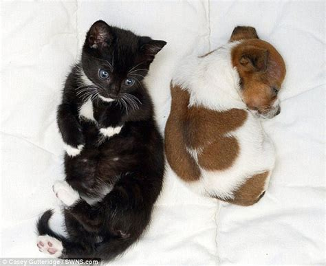 puppies and friends puppy and kitten best friends 010 funcage