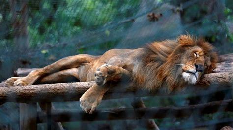 fotos animales zoo los animales mueren de hambre en un zoo de venezuela