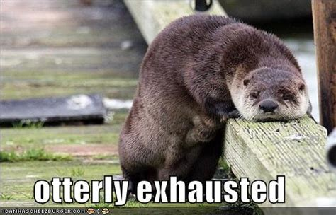 Exhausted Meme - exhausted meme face www pixshark com images galleries