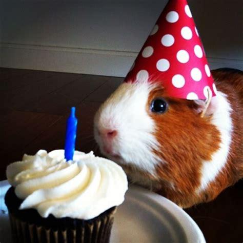 new year animal birthday 20 of the cutest animals celebrating their birthday
