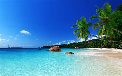 tropical island paradise tropical paradise beach ocean sea palm summer coast