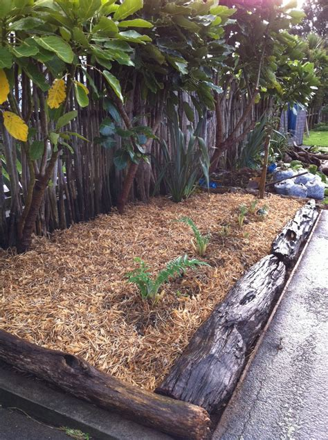 gardening bee joy darke  plant lottery kakarikistreet