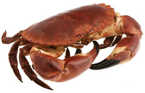cuisson crabe dormeur cuisson d un tourteau crabe temps de cuisson et recettes