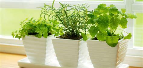 herbs indoors indoor herb gardens how to get growing and cooking