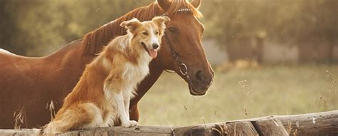 puppies and horses freestride aiming for arthritis approval animal pharm your single