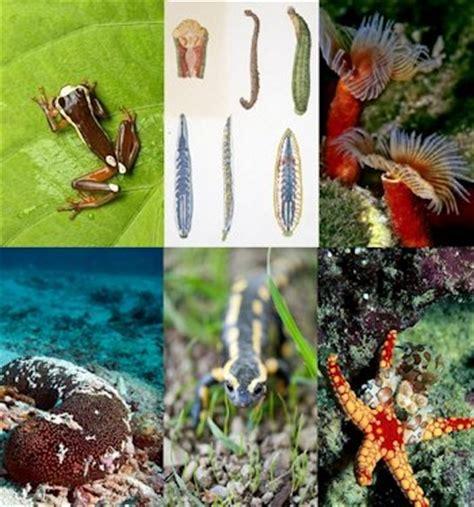 imagenes de animales que respiran por la piel ejemplo de animales que respiran por la piel