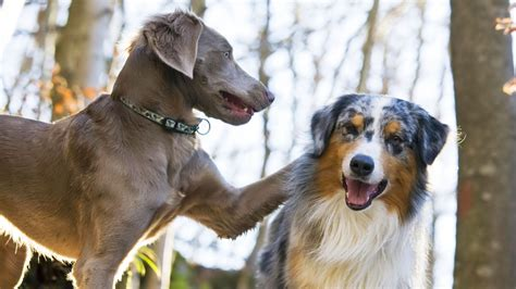 can puppies be around other dogs handling two dogs at a time