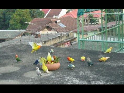 download mp3 iwan fals jalan panjang yg berliku angon lovebird karena angon bebek sudah terlalu mainstream