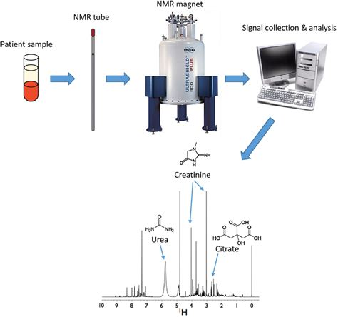 how does proton nmr work frontiers metabolomics and its application to acute lung