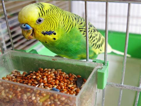 top 8 reasons why a bird could be the best choice for you