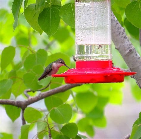 where should you hang a hummingbird feeder where should