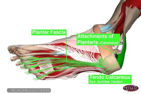 Planters Faceitis by What Triggers Plantar Fasciitis To Flare Up Deena