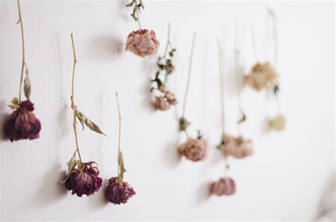how to put up decorations without damaging walls diy ombre dried flower wall juliette