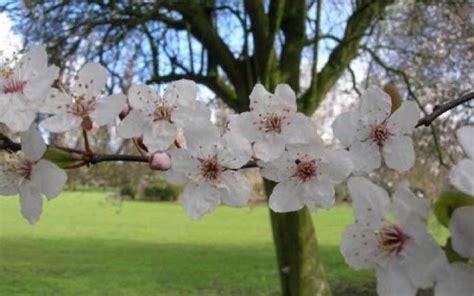 fiori di bach per neonati fiori di bach preparazione e dosaggi per i bambini e