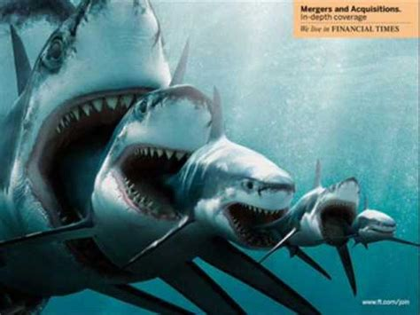 baby shark real life 17 best images about megalodon on pinterest no se