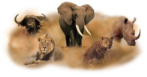 Big Picture Post Nation 5 by What Exactly Are The Big Five Animals And Where Can I
