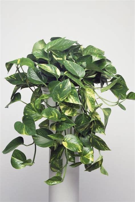 indoor plants  apartments  houseplants