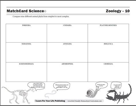 printable zoology worksheets animal phyla worksheet