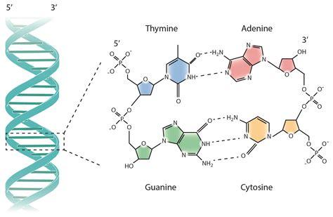 28 base wiring diagram k grayengineeringeducation