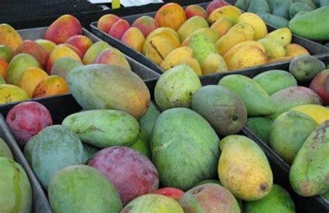 hay imagenes artisticas que producen desagrado nayarit entre los principales productores de mango j 237 cama