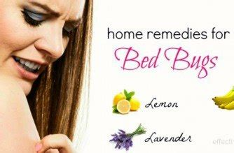bed bug removal home remedies 27 natural home remedies for bed bugs bites removal on body