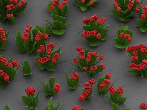 fiori di cristallo fiori di cristallo su orme dell anima