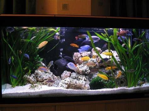aquascaping african cichlid aquarium 22 best images about aquarium on pinterest lakes malawi